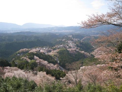 yoshinoyama sakura 2010